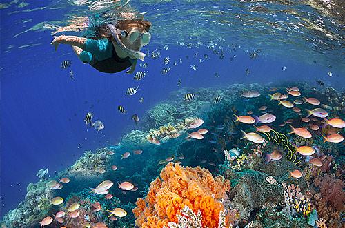 Parque Nacional de Arrecifes de Cozumel