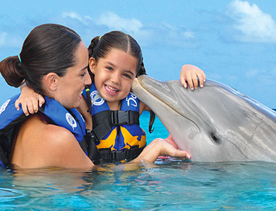 Dolphins in Cozumel if traveling by cruise ship