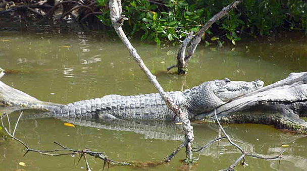 Crocodile Adventure Tour From Cancun And Riviera Maya