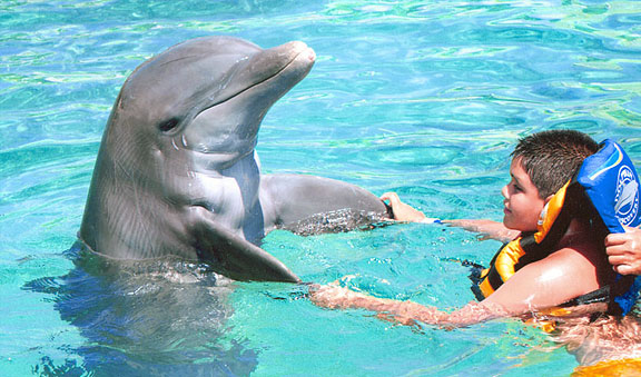 Dolphin Encounter - Cozumel