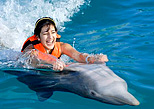 Get a ride in a dolphin