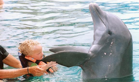 kids dolphin encouter