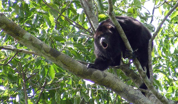 Visit the Spider Monkey and Puma House