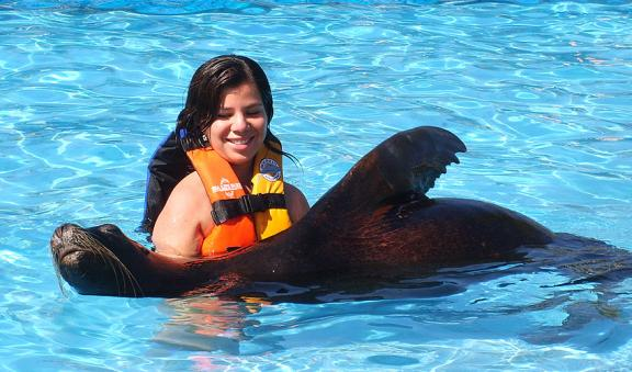 swim with sealinos