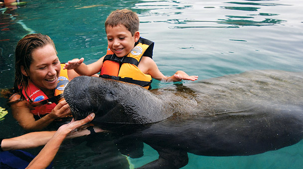 Swim with dolphins, sea lions and manatees