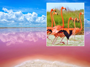 Las Coloradas and Rio Lagartos Private Tour