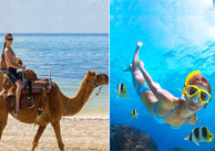 Reef Adventure y Camel Safari Tour