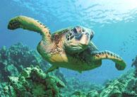 Morning Snorkeling  photo