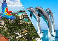 Xcaret Park and Swim with Dolphins combo tour