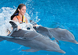 Dorsal ride with dolphins