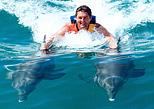 Dolphin royal riding activity