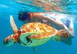 Live the experience of swimming with a sea turtle