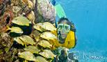 Snorkel tour in the caribbean