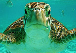 Snorkel Xtreme Tour - meet the turtles