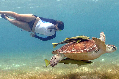 Snorkeling with Turtles in Akumal Riviera Maya