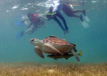 practice snorkel with marine turtles the best experience