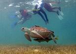 Practicar snorkel con tortugas la mejor experiencia