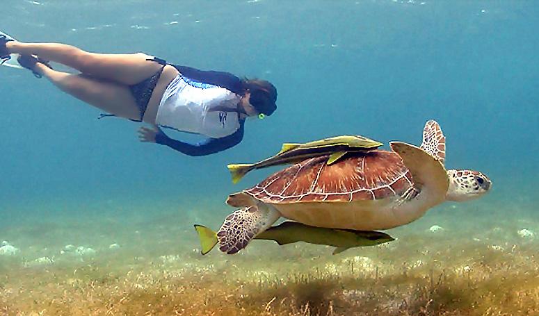 Snorkel con tortugas en la bahía de Akumal en la Riviera Maya