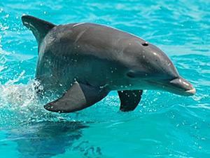 Wild Dolphin Tour in Sian Kaan
