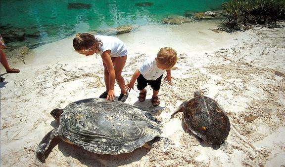Swim with turtles in Xcaret rivers